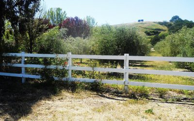 Plant-Powered Giveaway: California Olive Ranch