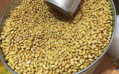 Lessons in Sustainability: Pulses