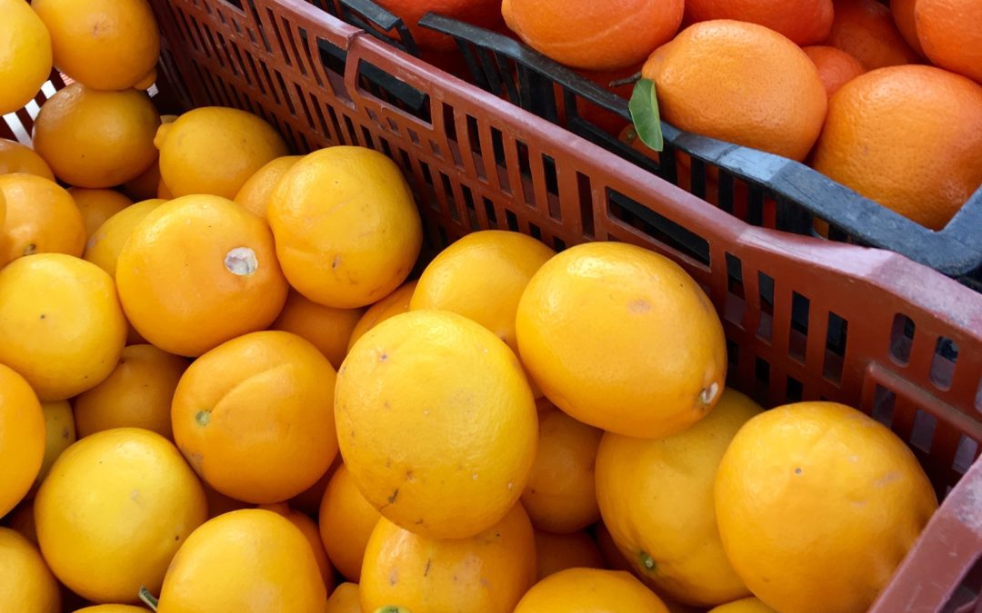 Science Saturday: Citrus Fruit May Counter Effects of Poor Eating