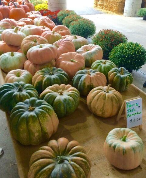 October Dirt Report: Pumpkin