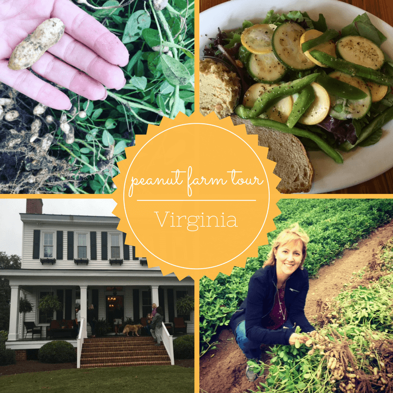 Peanut Farm Tour In Virginia Sharon Palmer The Plant Powered Dietitian