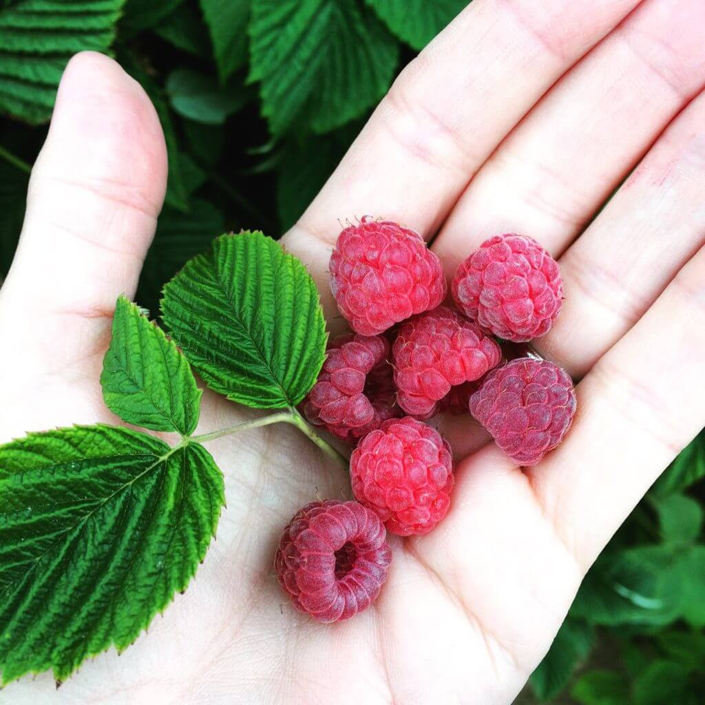 Fall in Love with Summer Berries!